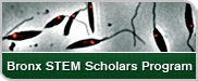 Bronx STEM Scholars Program